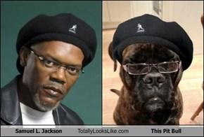 Samuel L. Jackson Totally Looks Like This Pit Bull