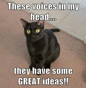 These voices in my head....  they have some GREAT ideas!!
