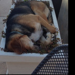 But You Said it Was a Flower Bed...