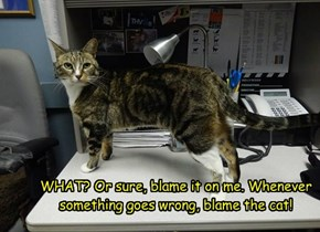 WHAT? Or sure, blame it on me. Whenever something goes wrong, blame the cat!