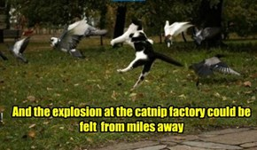 And the explosion at the catnip factory could be felt  from miles away