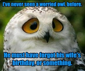 She's gonna HOOT, and holler!