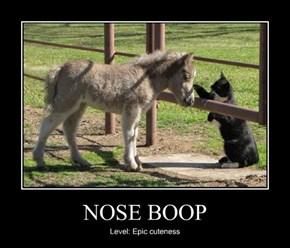 NOSE BOOP