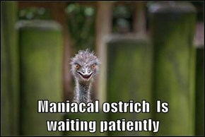 Maniacal ostrich  Is                            waiting patiently