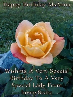 Happy Birthday MsAnna  Wishing A Very Special Birthday To A Very Special Lady From luvmy8catz