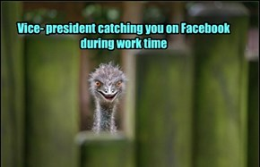 Vice- president catching you on Facebook during work time