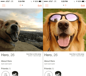 Joining Tinder as a Dog
