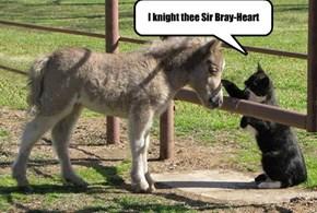 I knight thee Sir Bray-Heart