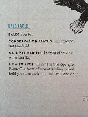 The Official Zoological Description of Bald Eagles