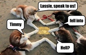 Lassie Gives Up