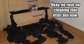 Okay, no rush on cleaning that litter box now.