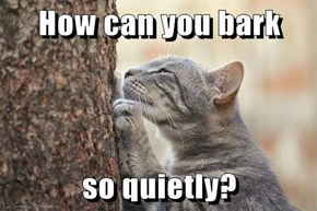 How can you bark  so quietly?
