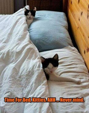 Time For Bed, Kitties. AHH ... Never mind.