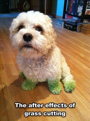 Want a Free Dye Job for Your Dog?
