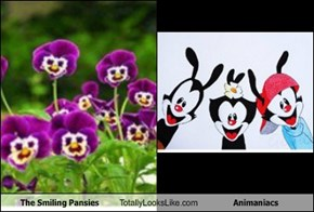 The Smiling Pansies Totally Looks Like Animaniacs