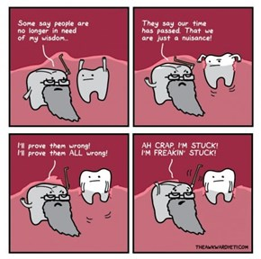 What Do Wisdom Teeth Know?