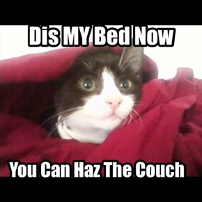 You Can Haz The Couch
