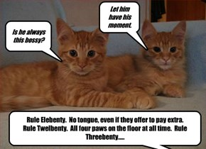 Harry runs down the rules of the Tabsworth Kissy Booth with Rupert and Rufus.