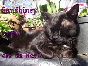 Sunshiney naps are da best!
