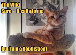 The Wild  Sure  -  It calls to me       but I am a Sophisticat