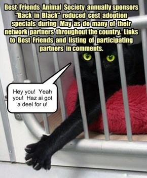 May is Black Cat Adoption Month!
