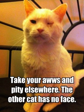Take your awws and pity elsewhere. The other cat has no face.