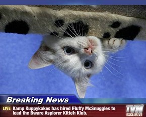 Breaking News - Kamp Kuppykakes has hired Fluffy McSnuggles to lead the Bware Asplorer Kitteh Klub.