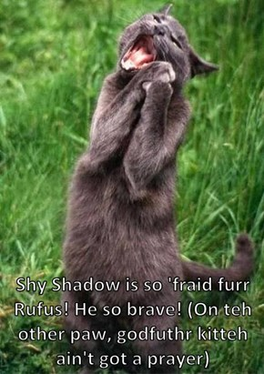 Shy Shadow is so 'fraid furr Rufus! He so brave! (On teh other paw, godfuthr kitteh ain't got a prayer)