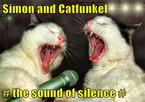 Simon and Catfunkel  # the sound of silence #