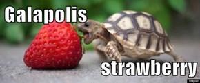 Galapolis  strawberry
