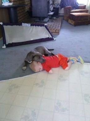 Interspecies Nap Time