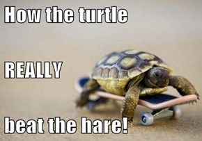 How the turtle REALLY beat the hare!
