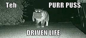 Teh                       PURR PUSS  DRIVEN LIFE