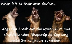 When left to their own devices,   dogs will break out the Queen CD's and sing Bohemian Rhapsody all day long until the neighbors complain.