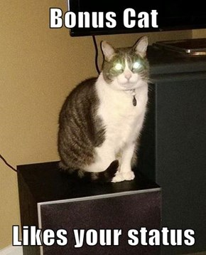 Bonus Cat  Likes your status