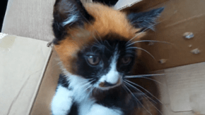 "Could the ""Red Panda Cat"" be a New Feline Breed or a Glorious Mutation?"