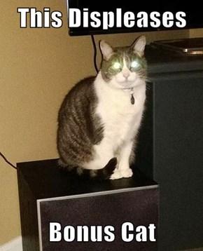 This Displeases  Bonus Cat