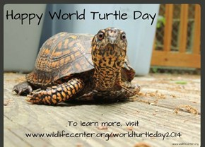 It's World Turtle Day May 14, 2014