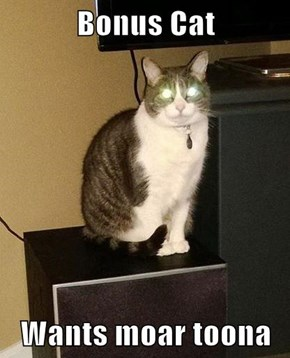 Bonus Cat  Wants moar toona