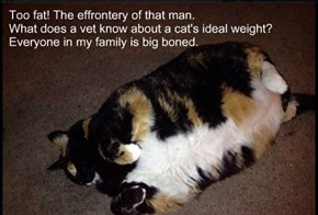 Too fat! The effrontery of that man.  What does a vet know about a cat's ideal weight?  Everyone in my family is big boned.