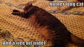 Nuther long cat  (And a wee bit wide)