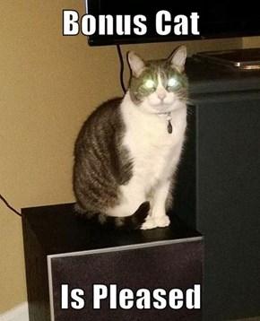 Bonus Cat  Is Pleased