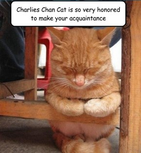Charlies Chan Cat is so very honored to make your acquaintance