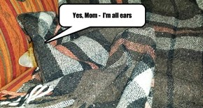 Yes, Mom -  I'm all ears