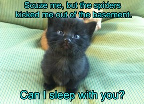 Scuze me, but the spiders  kicked me out of the basement.