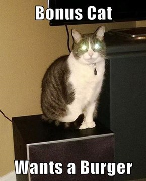 Bonus Cat  Wants a Burger