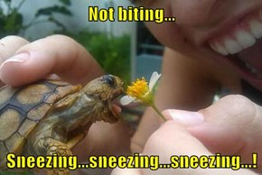 Not biting...  Sneezing...sneezing...sneezing...!