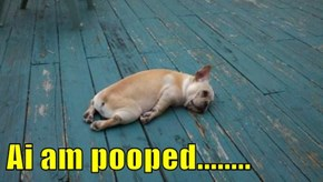 Ai am pooped........