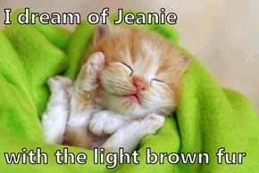 I dream of Jeanie  with the light brown fur