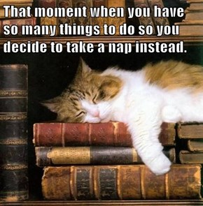 That moment when you have so many things to do so you decide to take a nap instead.